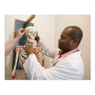 Doctores del estudiante que estudian la anatomía postal