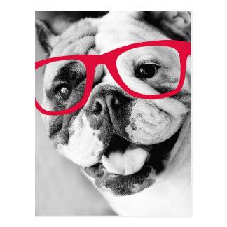 Dogo con la postal de los vidrios