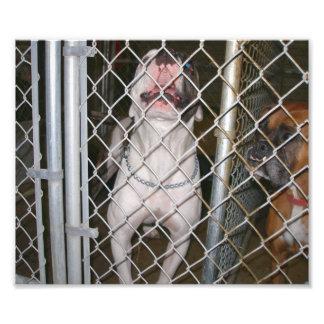 Dogo de risa dentro de una jaula fotografía