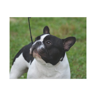 Dogo francés blanco y negro impresion en lona