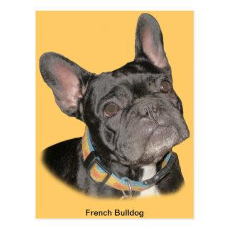 Dogo francés postal