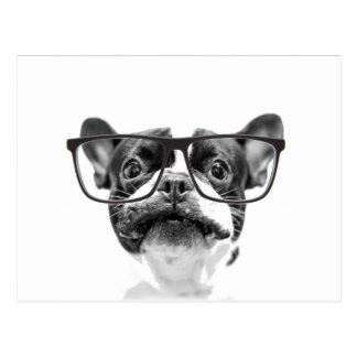 Dogo francés reputable con los vidrios postal