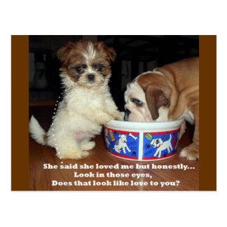 Dogo y perrito ingleses de Shih Tzu Postales