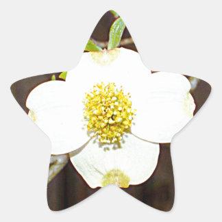 Dogwood de Carolina del Norte Pegatina En Forma De Estrella