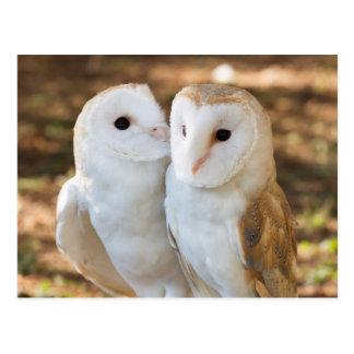 dos amigos de los búhos postal