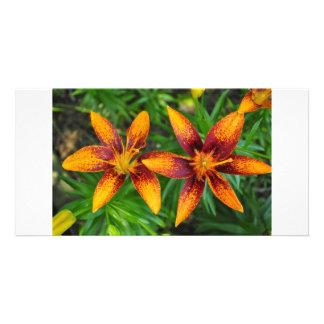 dos anaranjados y lillies rojos del tigre tarjetas personales