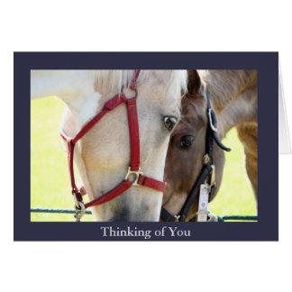 Dos caballos que piensan en usted tarjeta de