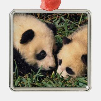 Dos cachorros de la panda en el arbusto de bambú ornamento para reyes magos