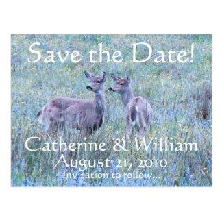 Dos ciervos ahorran la postal de la fecha