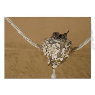 Dos colibríes en una jerarquía tarjeta