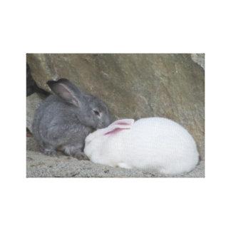 Dos conejos de conejito lindos impresion en lona