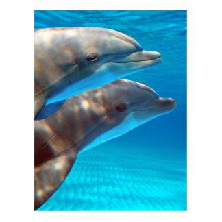 Dos delfínes que nadan postal