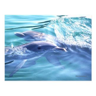 Dos delfínes que nadan tarjeta postal