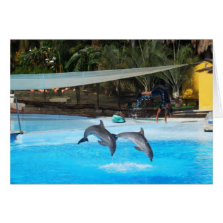 Dos delfínes tarjeta de felicitación