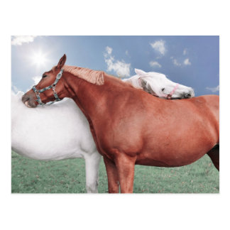 dos enamoró caballos postal