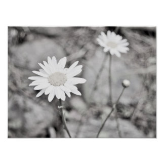 Dos flores blancas blancos y negros póster