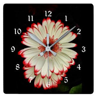 Dos flores blancas de la margarita del Gerbera Reloj Cuadrado