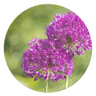 Dos flores púrpuras de cebollas ornamentales junto platos de comidas