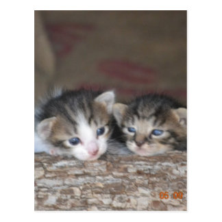 Dos gatitos en registro postal