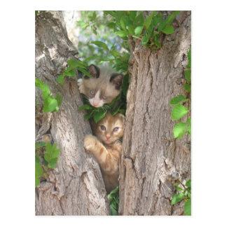 Dos gatitos lindos en un árbol postal