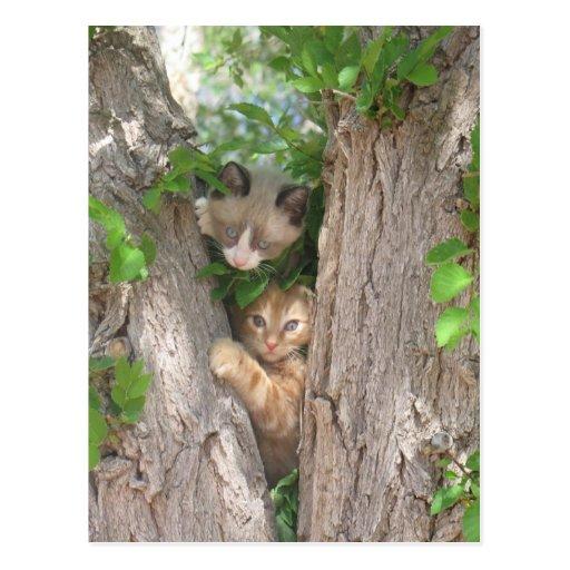 Dos gatitos lindos en un árbol tarjeta postal