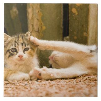 Dos gatitos, Marruecos Azulejo Cuadrado Grande