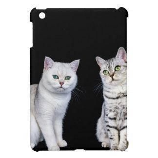 Dos gatos británicos del pelo corto en fondo negro