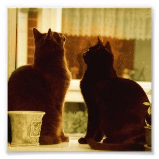 Dos gatos en el travesaño de la ventana de la foto