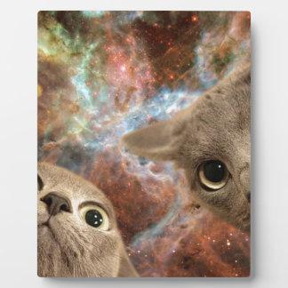 Dos gatos grises en espacio antes de una nebulosa placa expositora