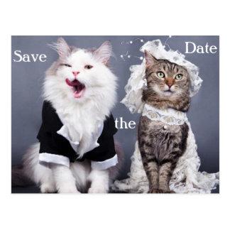 dos gatos lindos postal