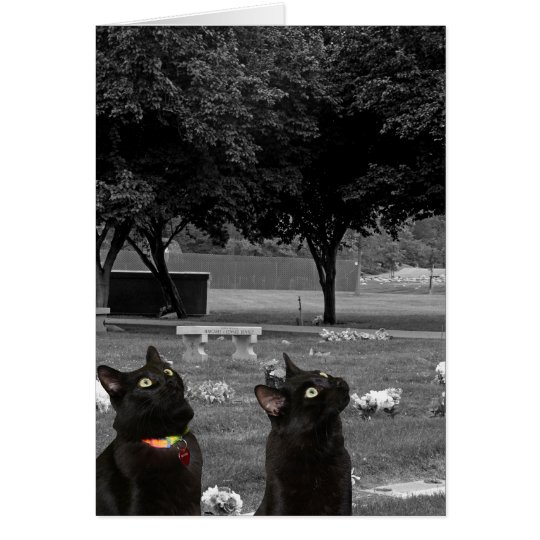 Dos gatos negros en tarjeta de felicitación del