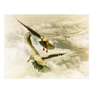 Dos gaviotas postal