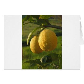 Dos limones maduros que cuelgan en árbol tarjeta