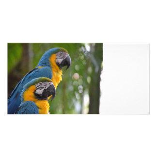 dos macaw c enfocada delantera bird.jpg plantilla para tarjeta de foto