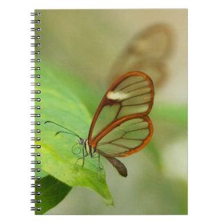 Dos mariposas coas alas vidrio cuaderno