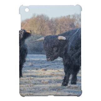 Dos montañeses escoceses negros en prado congelado