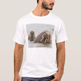 Dos morsas en el agua, Noruega Camiseta