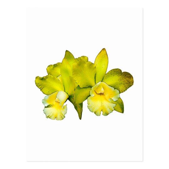 Dos orquídeas amarillas postal