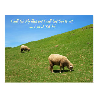 Dos ovejas están pastando pacífico postal