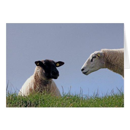 Dos ovejas tarjeton