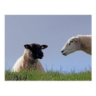 Dos ovejas tarjetas postales