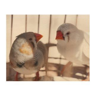 Dos pájaros lindos del pinzón detrás de barras impresión en madera