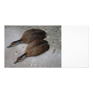 dos patos que mienten completamente de lado plantilla para tarjeta de foto