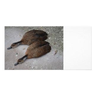 dos patos que mienten completamente de lado tarjetas personales