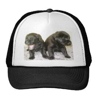 Dos perritos negros de Labrador - camiseta Gorro
