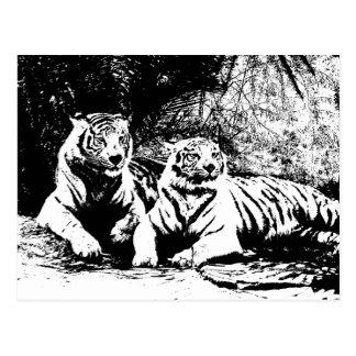 Dos tigres en blanco y negro postal