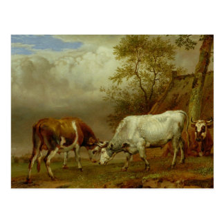 Dos toros con los cuernos bloqueados, 1653 tarjeta postal