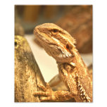Dragón barbudo impresion fotografica