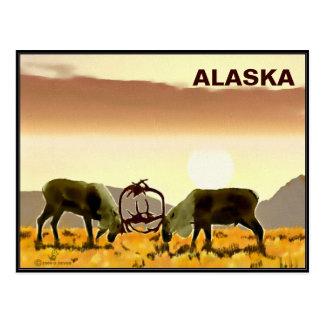 Duelo del caribú - Alaska Postales