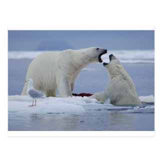 Duelo del oso polar postal